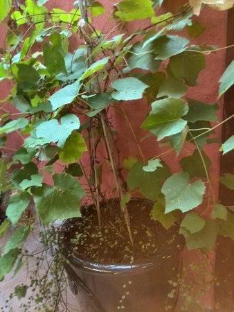 Central Hotel: garden pot plant