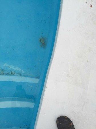 Paradisus Rio de Oro Resort & Spa: Tous les matins il y avait des crabes dans la piscine