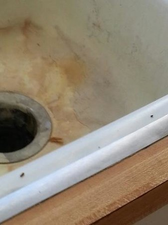 kitchen sink upon arrival. Mouse droppings and what appears ...