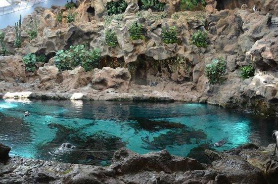 Sea lions picture of loro parque puerto de la cruz tripadvisor - Loro parque puerto de la cruz ...