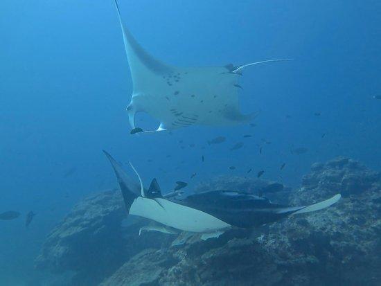 Bandos Maldives : Wonderful dive with Mantas