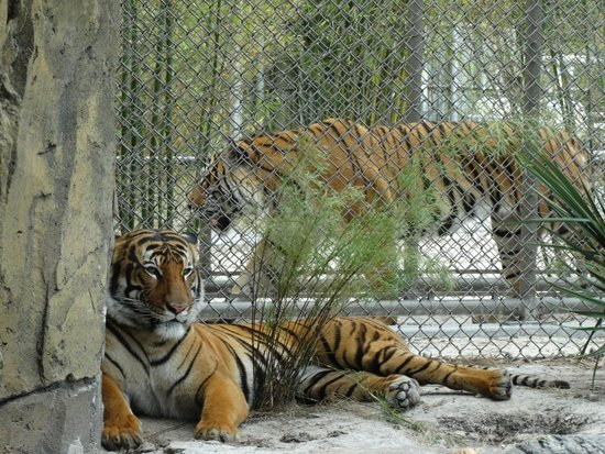 Soft Kitty Warm Kitty Picture Of Jacksonville Zoo Gardens Jacksonville Tripadvisor