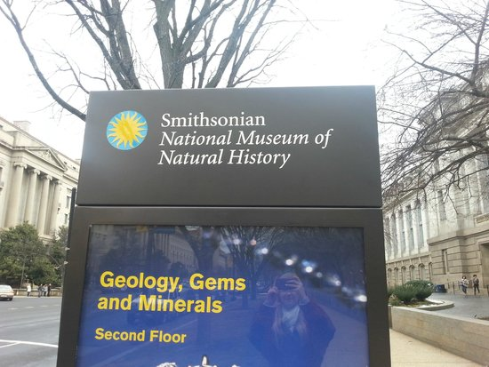 Restaurants Near The Smithsonian Natural History Museum