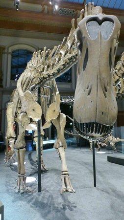 Museum fur Naturkunde (Natural History Museum) : Dinosaures room: BIG one!