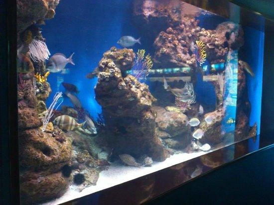 Peces y estrella de mar picture of l aquarium de for Aquarium de barcelona
