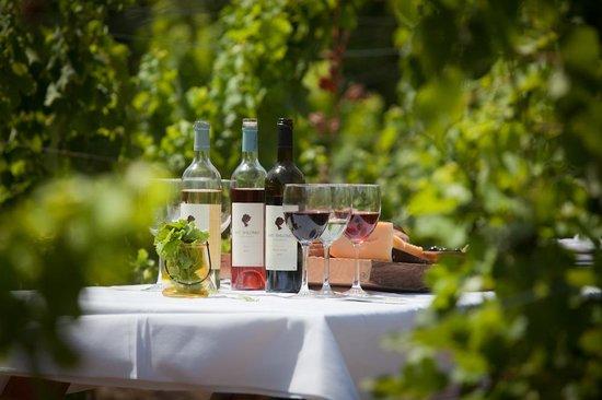 Bat Shlomo, Izrael: Private tastings between the vines