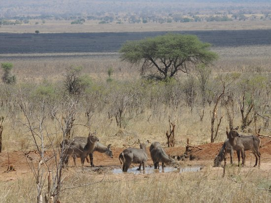 Ecoscience Science Center and Luxury Lodge : Waterbucks vus depuis le salon