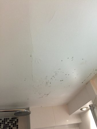 BEST WESTERN Hotel De L'Europe by HappyCulture: Fungus on the ceiling in the bathroom (room 245). 9.11.14