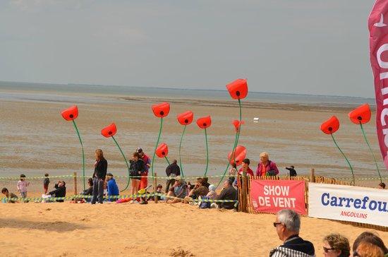Plage de Châtelaillon: les coquelicots pousse sur la plage