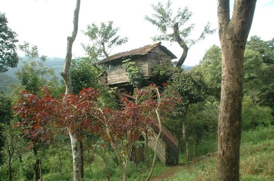 The Tree House Bethel Homestay Coorg Picture Of Bethel