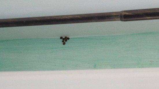 Family Hôtel : Au plafond, dans plusieurs endroits, araignées et coccinelles....