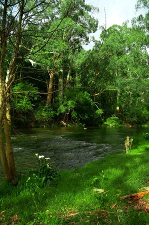 Oscar's on the Yarra: Along the river