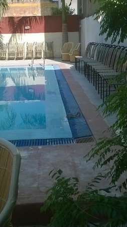 Tiger Safari Resort: squirrel in the pool area