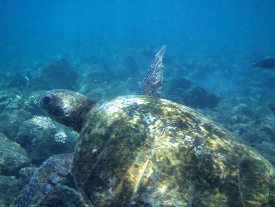Ahihi-Kinau Natural Area Reserve: snorkeling