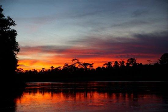 Nature Lodge Kinabatangan: Sunset from the evening river cruise!