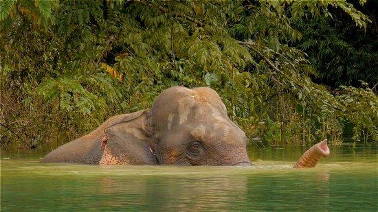 Khao Sok Paradise Resort: Thai elephant