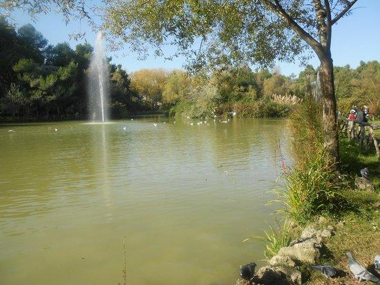 Pineta Dannunziana : laghetto