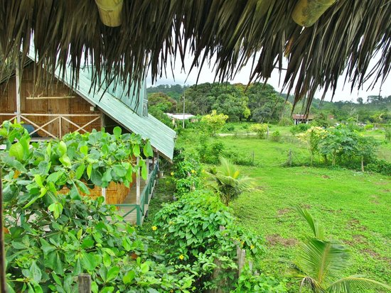 Bamboo platform lounging Picture of La Jungla Tropical Bungalows