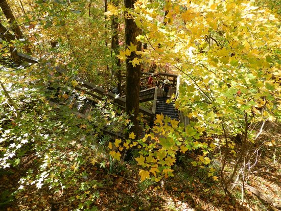 Amicalola fall: the staircase leading from the top to the bottom (don't bother)