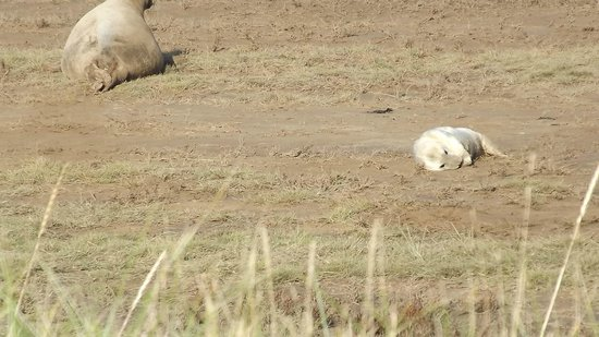 Donna Nook Nature Reserve: Pup enjoying the sunshine