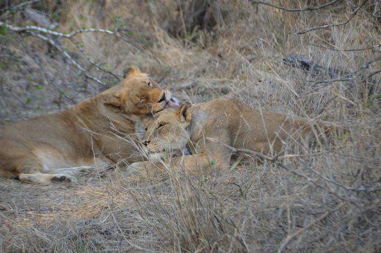 Gomo Gomo Game Lodge: Sisters greeting each other