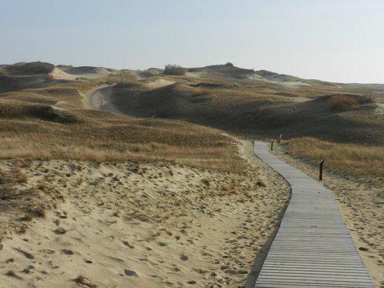 Curonian Spit / Kursiu Nerija National Park: вид на дюну Вецекруг