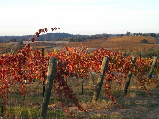 Iron Hub Winery: Amador Foothill Winery, Fall Colors