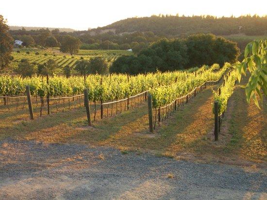 Iron Hub Winery: Amador Foothill Winery, Aglianico