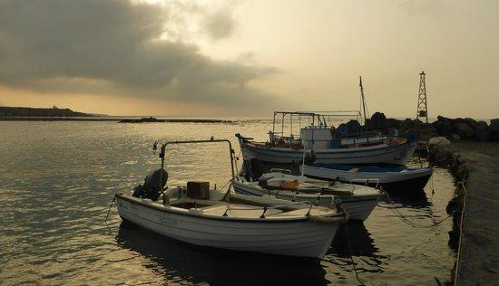 Flisvos Taverna: The Flisvos harbour at dawn