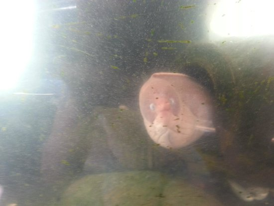 Casa del Mar: Удивленная мурена в местном аквариуме