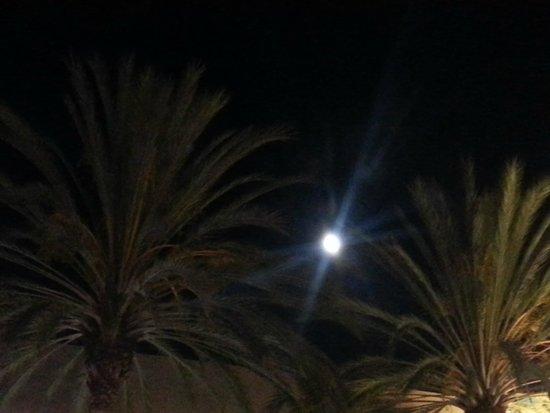 Staybridge Suites San Jose: Full moon in San Jose @ Staybridge Suites