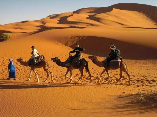 Rissani, Maroko: camel