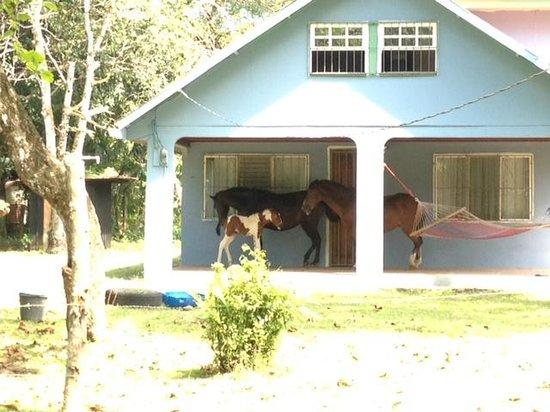 Rafiki Beach Camp: Neighbors house has horses