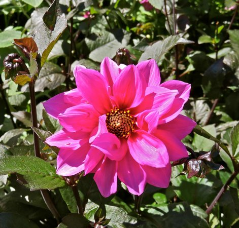 Thuya Gardens: Pink beauties