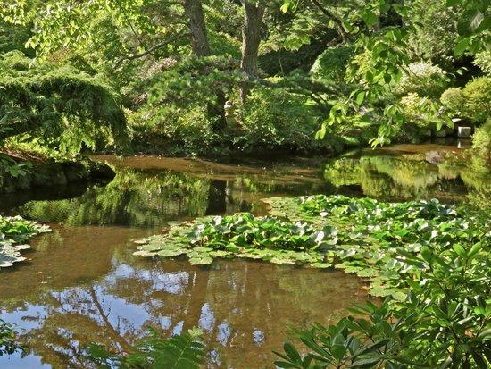 Asticou Azalea Garden: Lovely setting