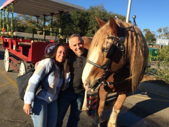 Sea Island Carriage Company: Us & the Horse