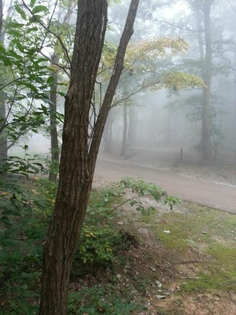 trees, fog, road inside of campground