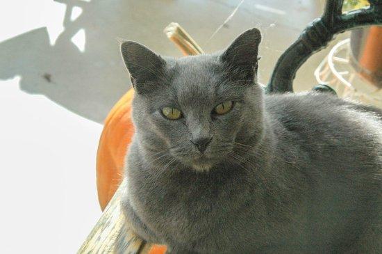 Rockbridge, MO: Hotel Cat