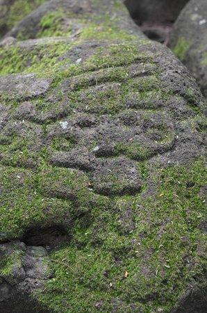 Finca Magdalena : Petroglyph!