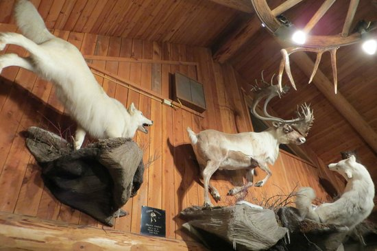 Just a few of Montana wildlife mounts at the Lolo Creek Steakhouse!