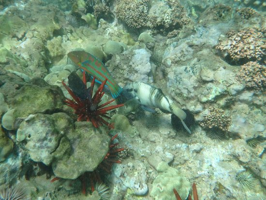 Ulua Beach: Some of the fish life at the reef