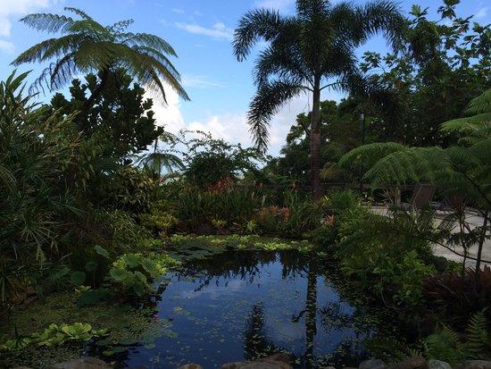 Rainforest Inn: Not a bad view!