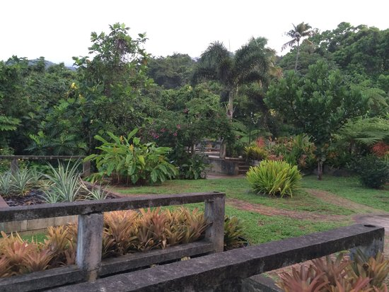 Rainforest Inn: lots of space