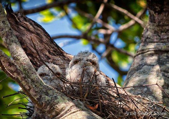 Tallow Beach Houses : Wildlife