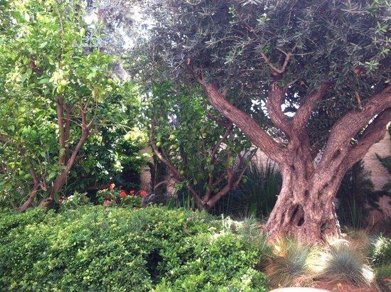 Bay Club Haifa Hotel - an Atlas Boutique Hotel: Beautiful landscaping