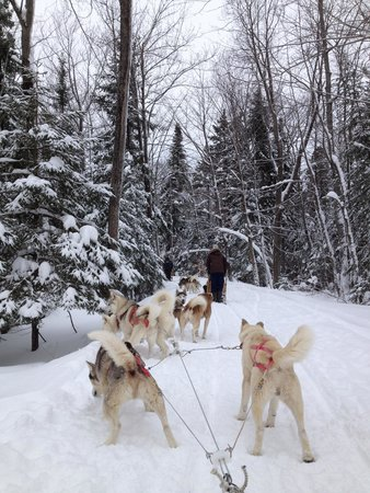 Expedition Mi-Loup Dog Sledding : Spectacular view from inside the sled