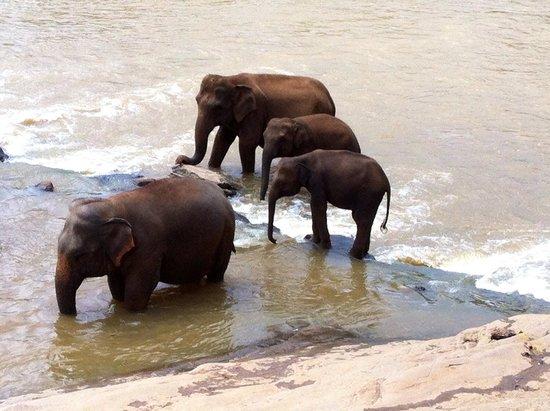 Hotel Elephant Bay: Mangiare guardando loro giocare