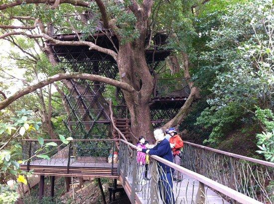 Hoshino Resorts RISONARE Atami : 森の空中基地くすくす