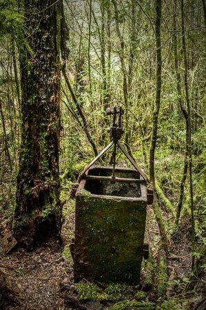Queenstown Heritage Tours: Relic in the Rainforest. Harris Reward mines