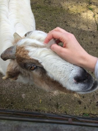 Carinya Farm Holiday Retreat: Bill the goat who stole my heart